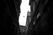 048_Portfolio_Street_Torino_2014_20
