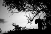 Cravo_ShadowsLight18