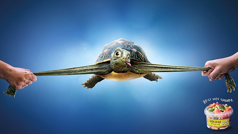 Tartaruga caramella tirata per le zampe
