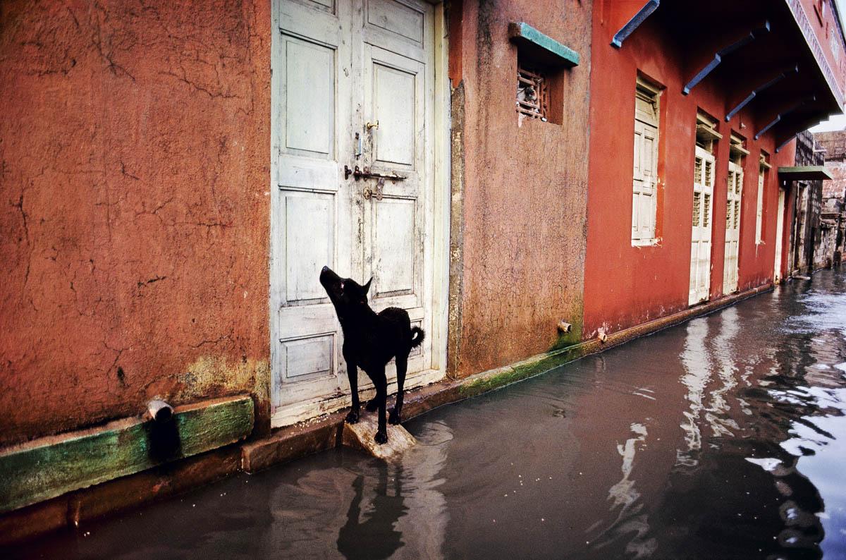 McCurry Animals Milano Sudest57