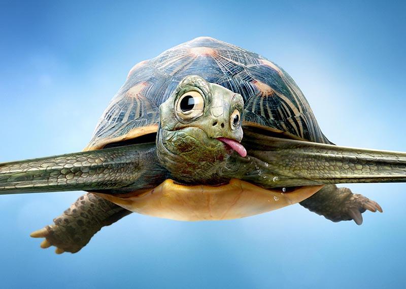 Dettaglio tartaruga lingua fuori